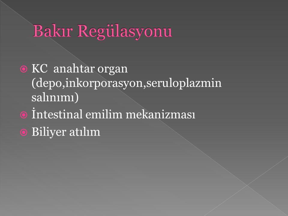 Bakır Regülasyonu KC anahtar organ (depo,inkorporasyon,seruloplazmin salınımı) İntestinal emilim mekanizması.
