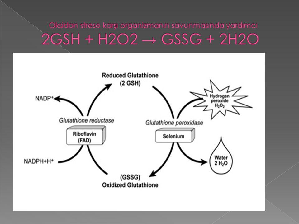 Oksidan strese karşı organizmanın savunmasında yardımcı 2GSH + H2O2 → GSSG + 2H2O