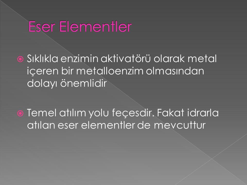 Eser Elementler Sıklıkla enzimin aktivatörü olarak metal içeren bir metalloenzim olmasından dolayı önemlidir.
