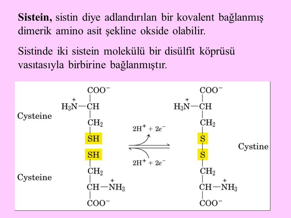 Sistein, sistin diye adlandırılan bir kovalent bağlanmış dimerik amino asit şekline okside olabilir.
