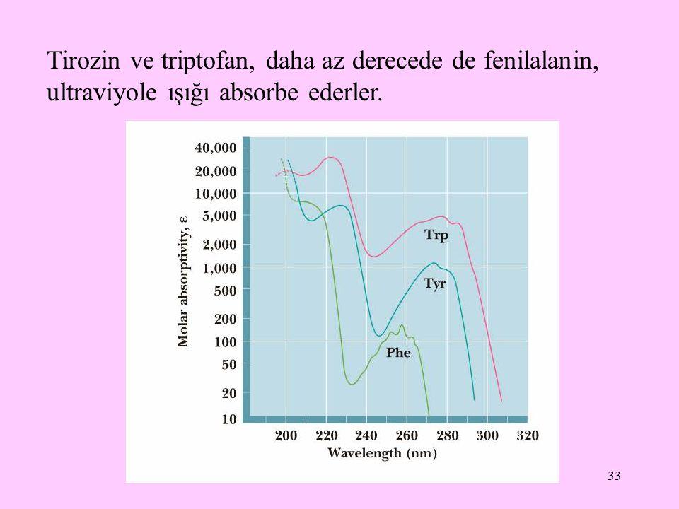 Tirozin ve triptofan, daha az derecede de fenilalanin, ultraviyole ışığı absorbe ederler.