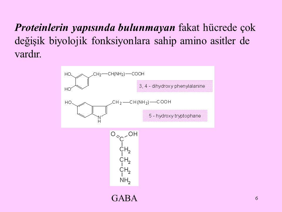 Proteinlerin yapısında bulunmayan fakat hücrede çok değişik biyolojik fonksiyonlara sahip amino asitler de vardır.