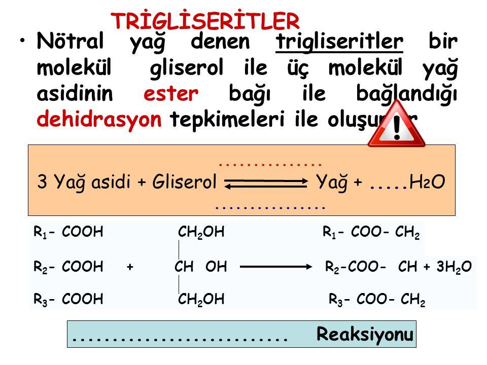 3 Yağ asidi + Gliserol Yağ + .....H2O