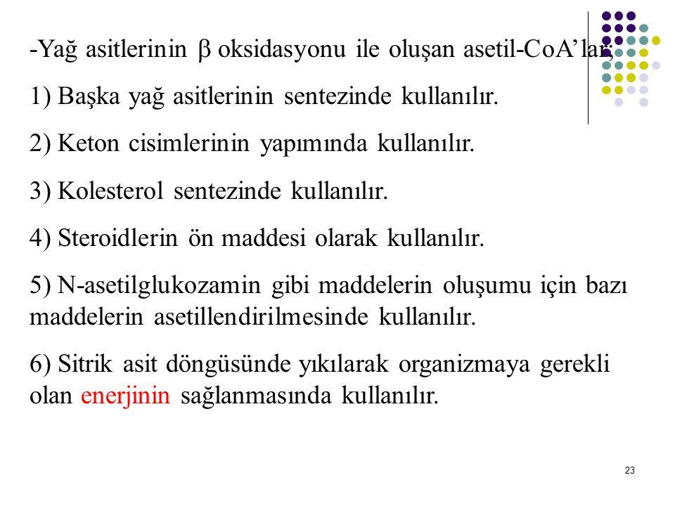 -Yağ asitlerinin  oksidasyonu ile oluşan asetil-CoA'lar;