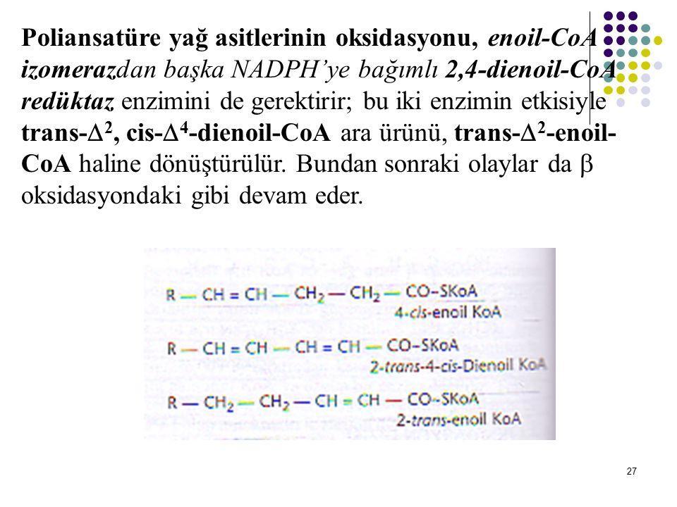 Poliansatüre yağ asitlerinin oksidasyonu, enoil-CoA izomerazdan başka NADPH'ye bağımlı 2,4-dienoil-CoA redüktaz enzimini de gerektirir; bu iki enzimin etkisiyle trans-2, cis-4-dienoil-CoA ara ürünü, trans-2-enoil-CoA haline dönüştürülür.