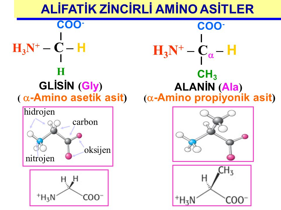 ALİFATİK ZİNCİRLİ AMİNO ASİTLER (-Amino propiyonik asit)
