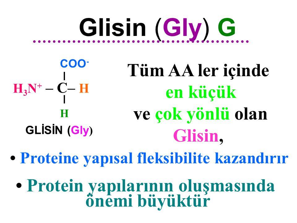 • Protein yapılarının oluşmasında