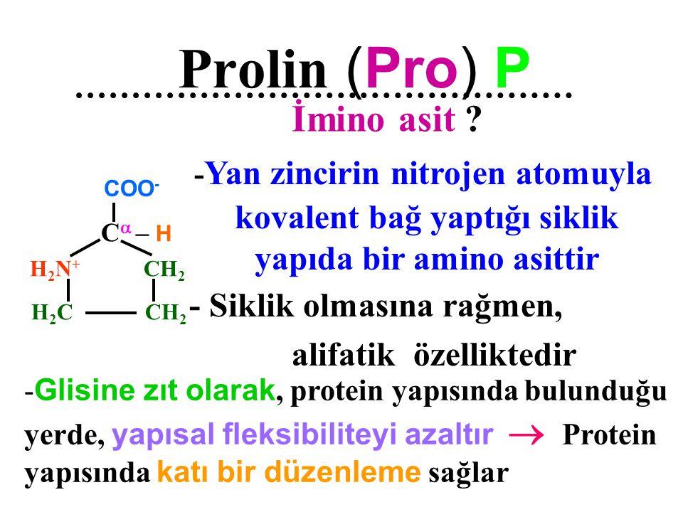 İmino asit Prolin (Pro) P kovalent bağ yaptığı siklik