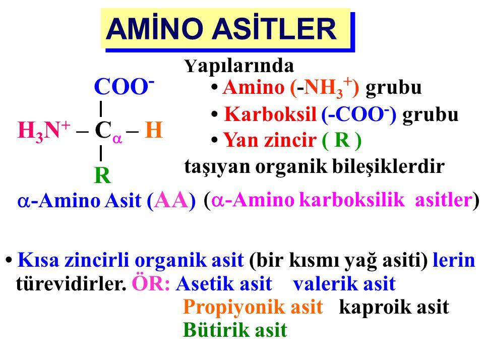 AMİNO ASİTLER COO- H3N+ – C – H R Yapılarında • Amino (-NH3+) grubu