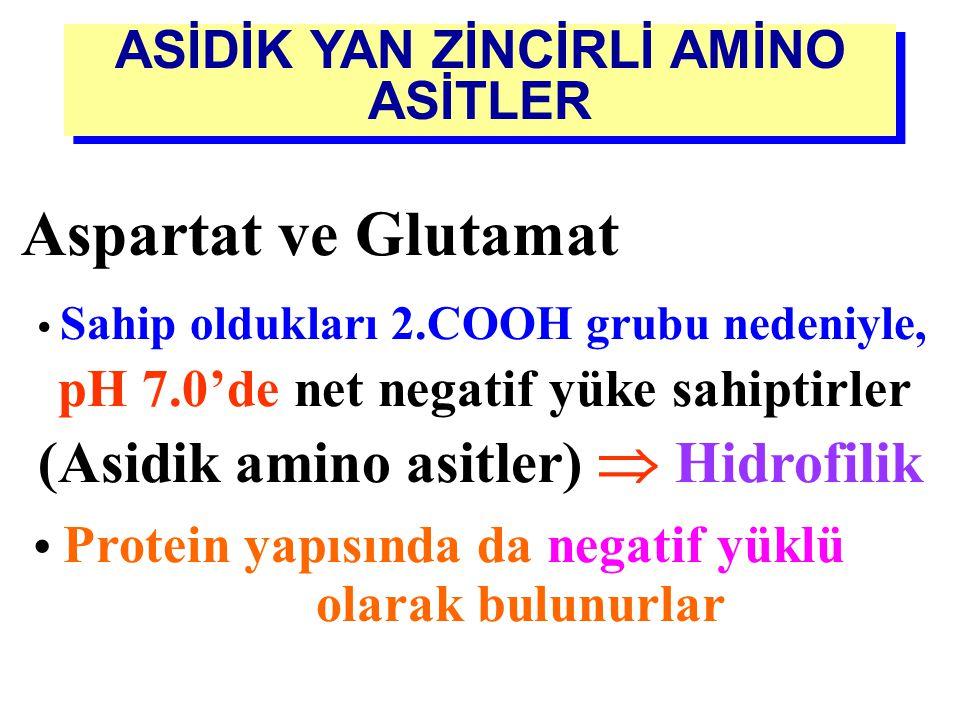 ASİDİK YAN ZİNCİRLİ AMİNO ASİTLER (Asidik amino asitler)  Hidrofilik