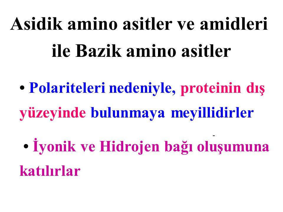 Asidik amino asitler ve amidleri ile Bazik amino asitler