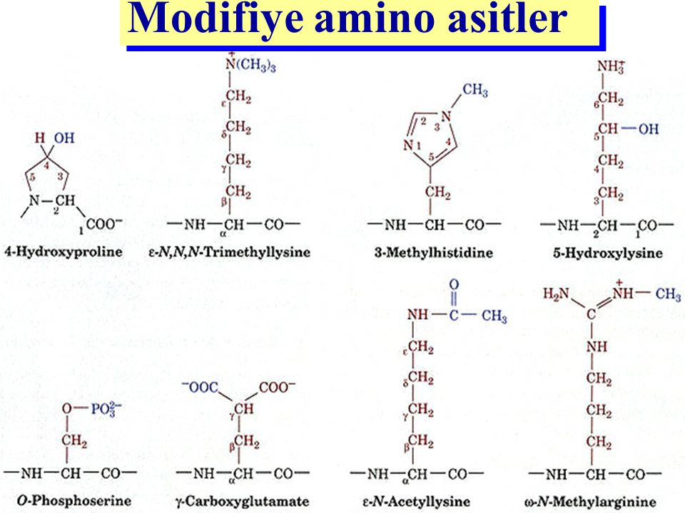 Modifiye amino asitler