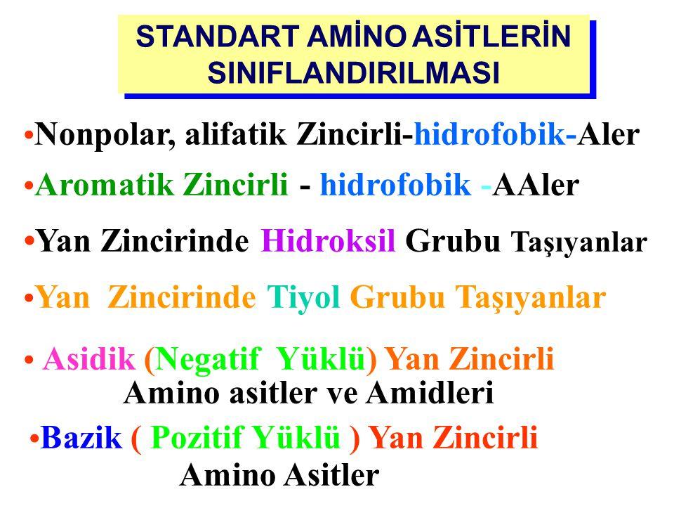 STANDART AMİNO ASİTLERİN SINIFLANDIRILMASI