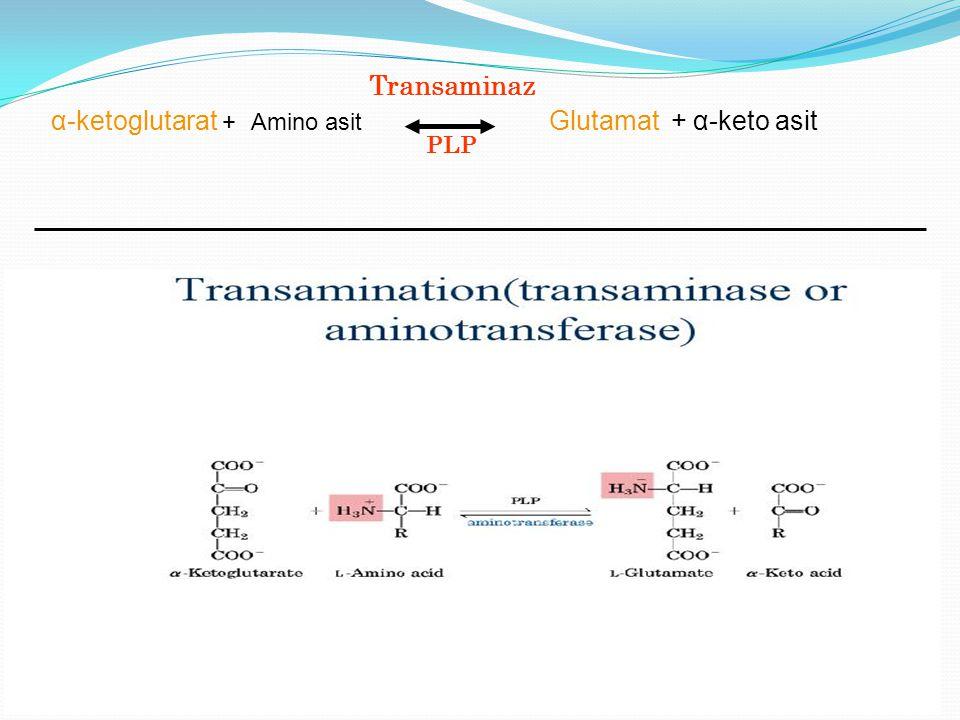 α-ketoglutarat + Amino asit Glutamat + α-keto asit