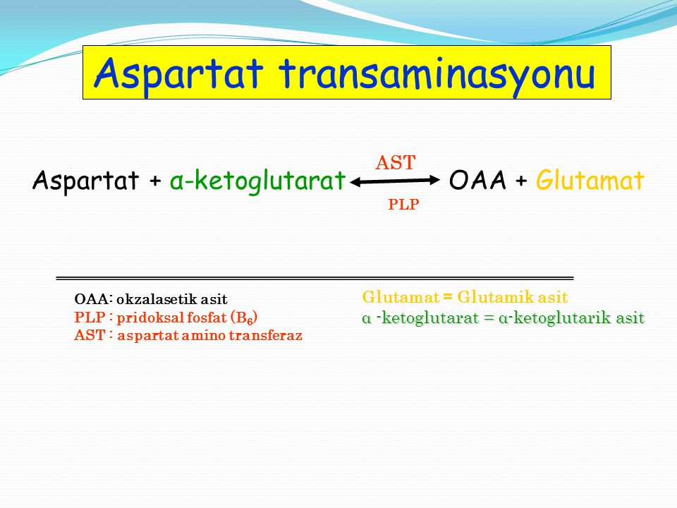 Aspartat transaminasyonu
