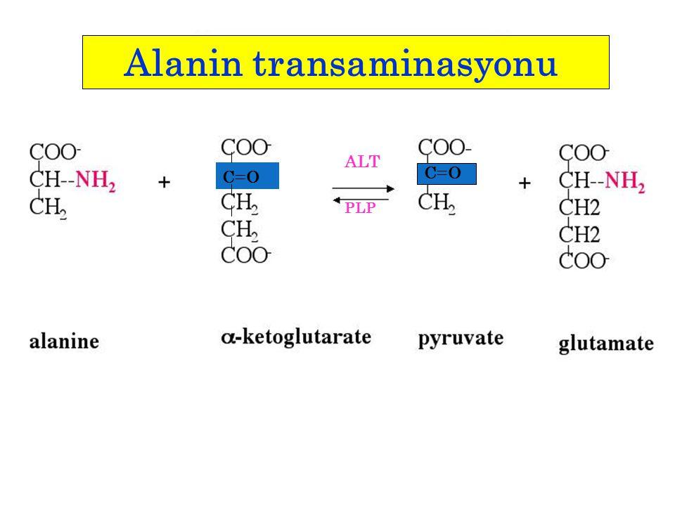 Alanin transaminasyonu