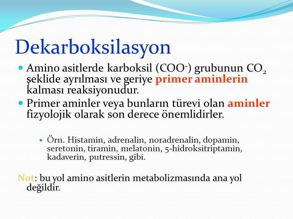 Dekarboksilasyon Amino asitlerde karboksil (COO-) grubunun CO2 şeklide ayrılması ve geriye primer aminlerin kalması reaksiyonudur.
