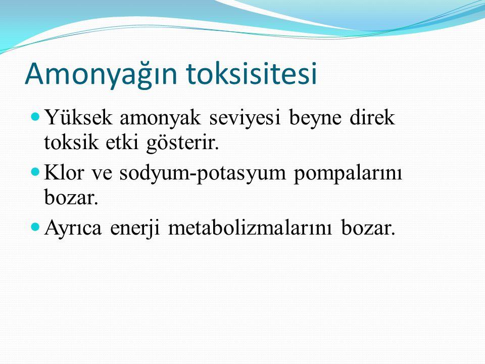 Amonyağın toksisitesi