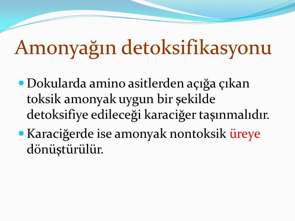 Amonyağın detoksifikasyonu