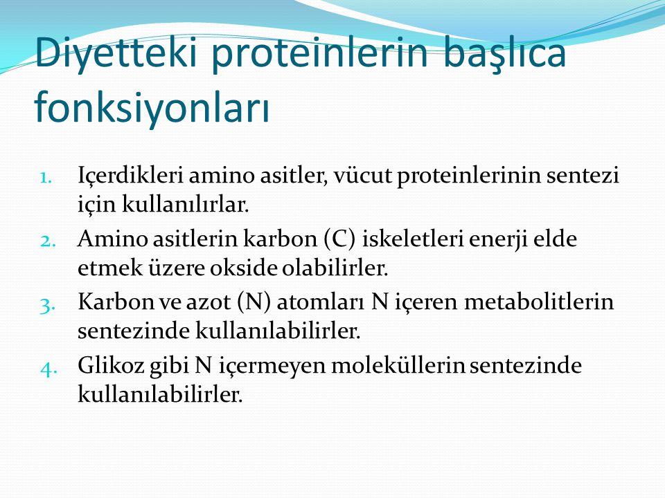 Diyetteki proteinlerin başlıca fonksiyonları