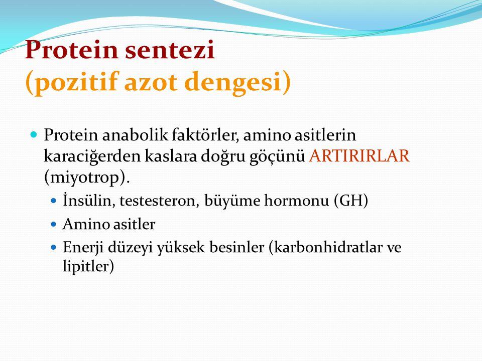 Protein sentezi (pozitif azot dengesi)