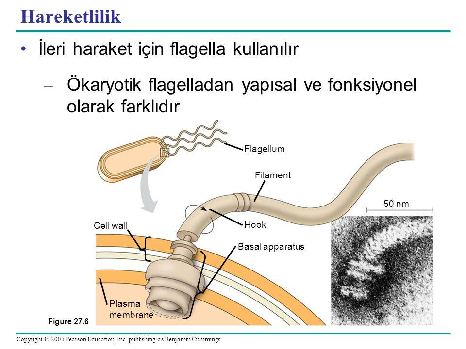 Hareketlilik İleri haraket için flagella kullanılır