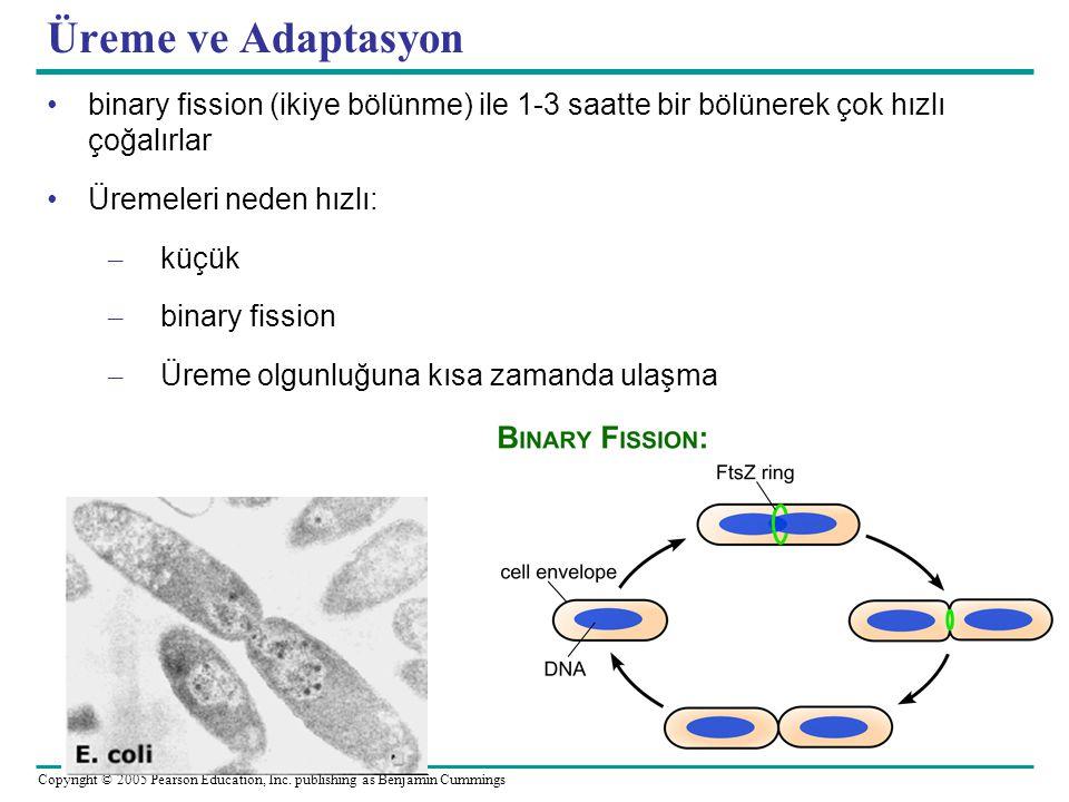 Üreme ve Adaptasyon binary fission (ikiye bölünme) ile 1-3 saatte bir bölünerek çok hızlı çoğalırlar.