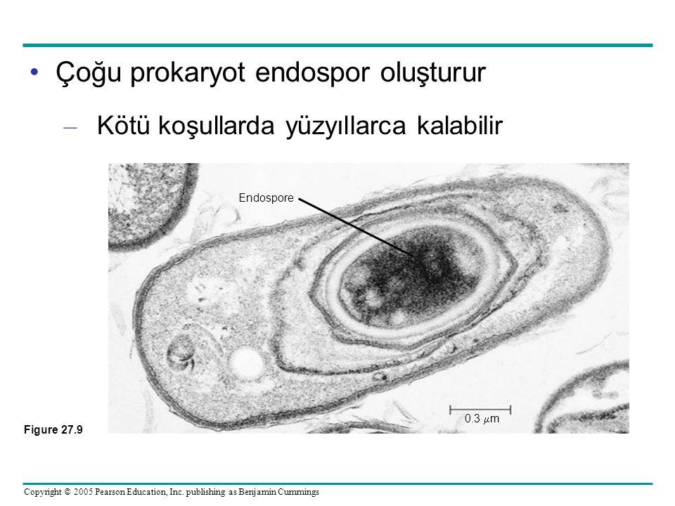 Çoğu prokaryot endospor oluşturur