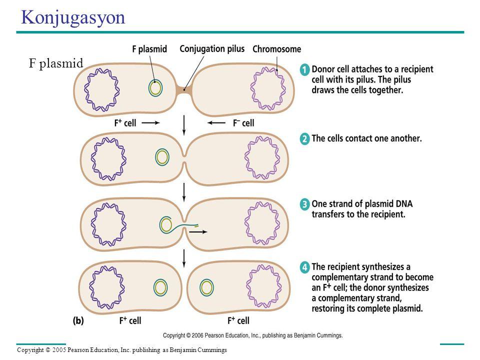 Konjugasyon F plasmid