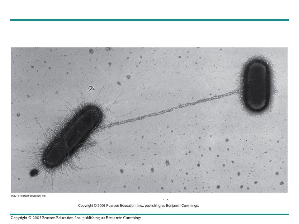 Hfr (Kromozomda F Faktörü)