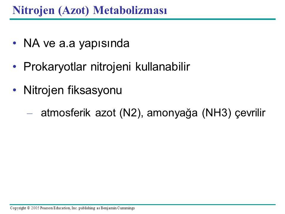 Nitrojen (Azot) Metabolizması