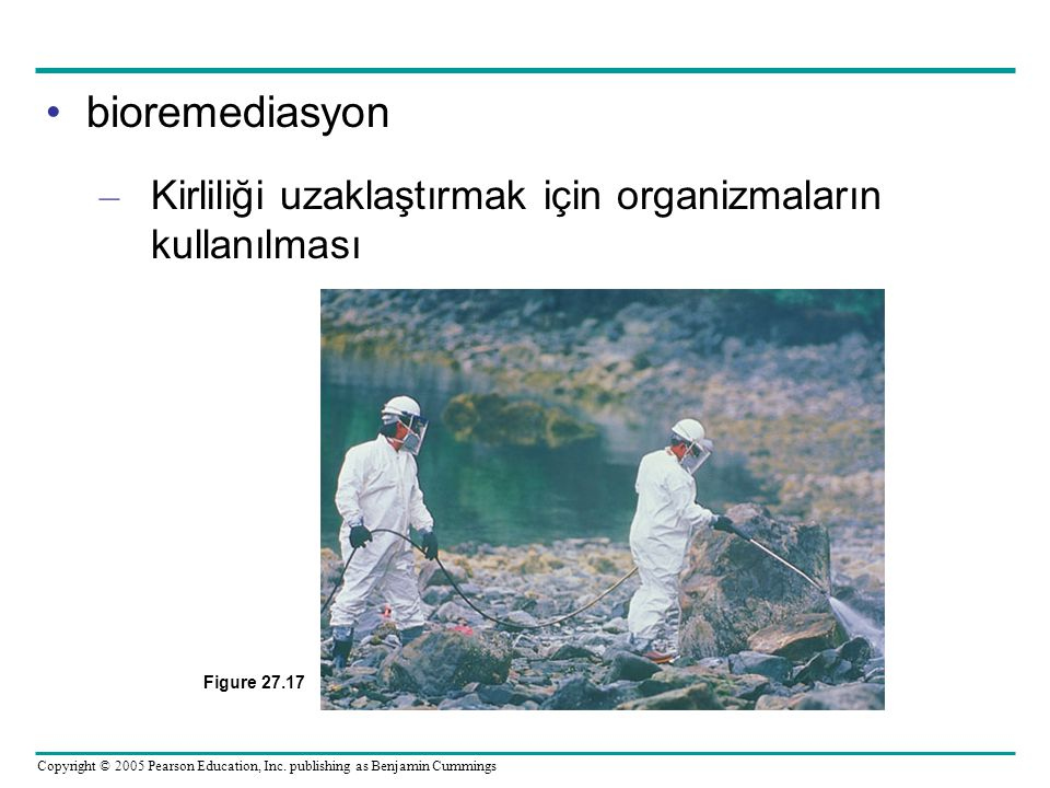 bioremediasyon Kirliliği uzaklaştırmak için organizmaların kullanılması Figure 27.17