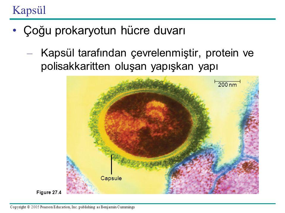 Çoğu prokaryotun hücre duvarı
