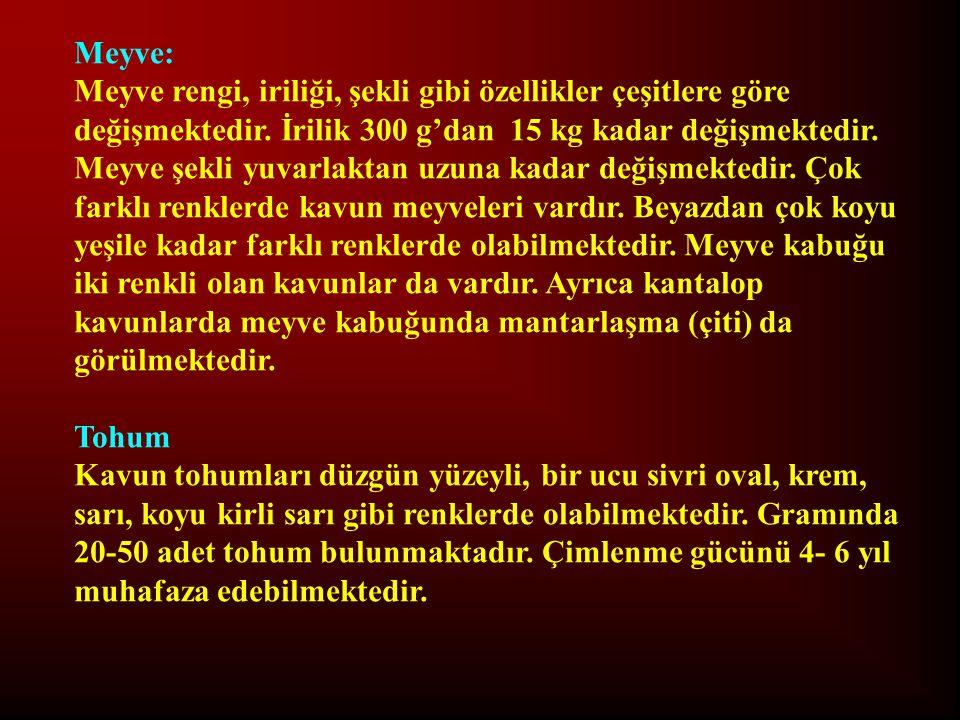 Meyve:
