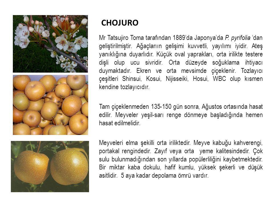 CHOJURO