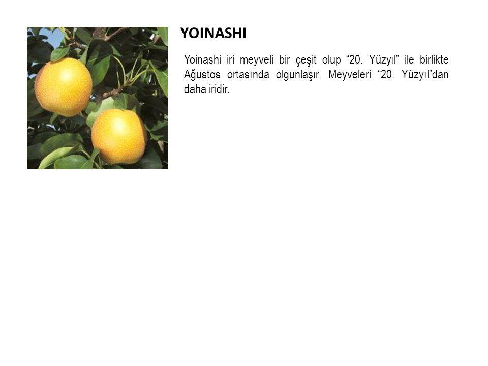 YOINASHI Yoinashi iri meyveli bir çeşit olup 20. Yüzyıl ile birlikte Ağustos ortasında olgunlaşır. Meyveleri 20. Yüzyıl dan daha iridir.