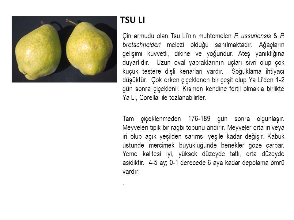 TSU LI