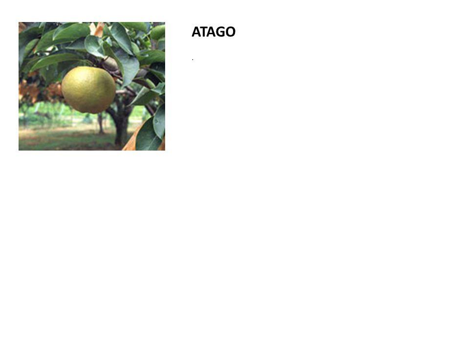 ATAGO .