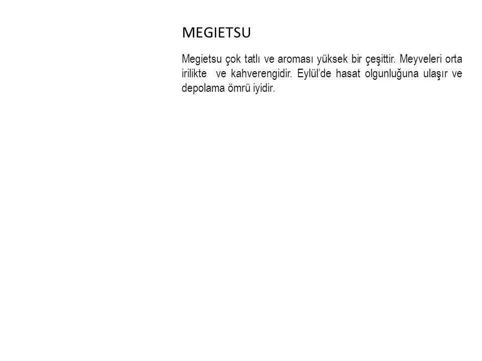 MEGIETSU