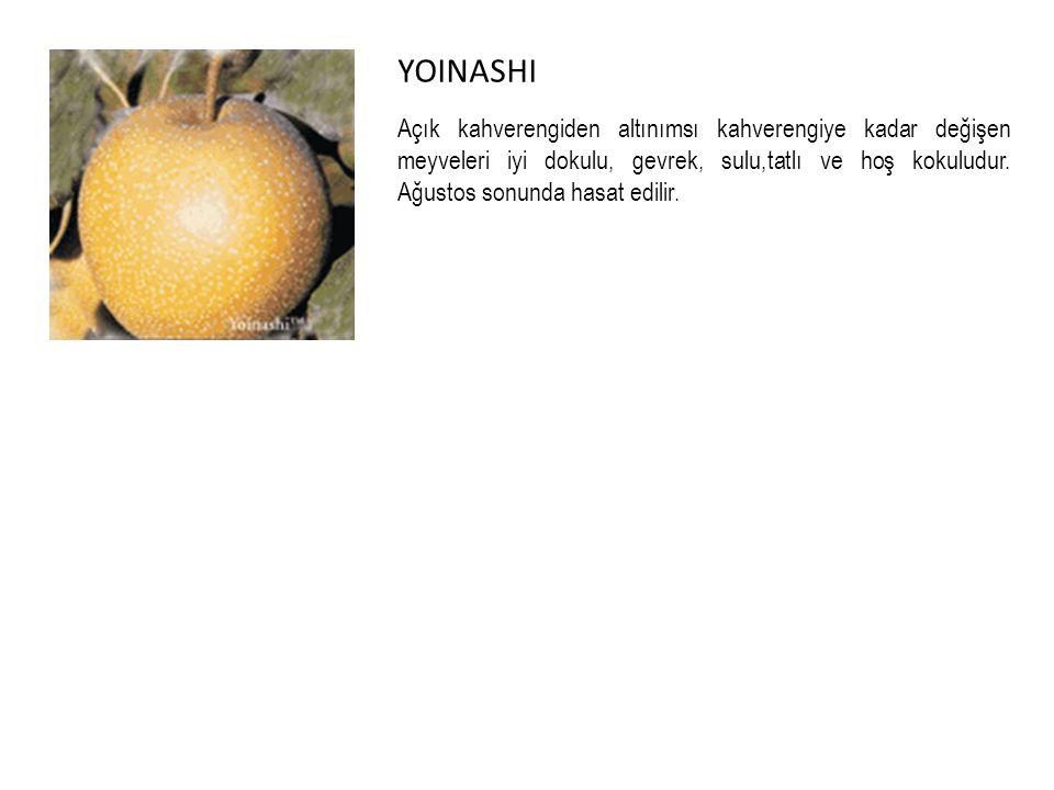 YOINASHI