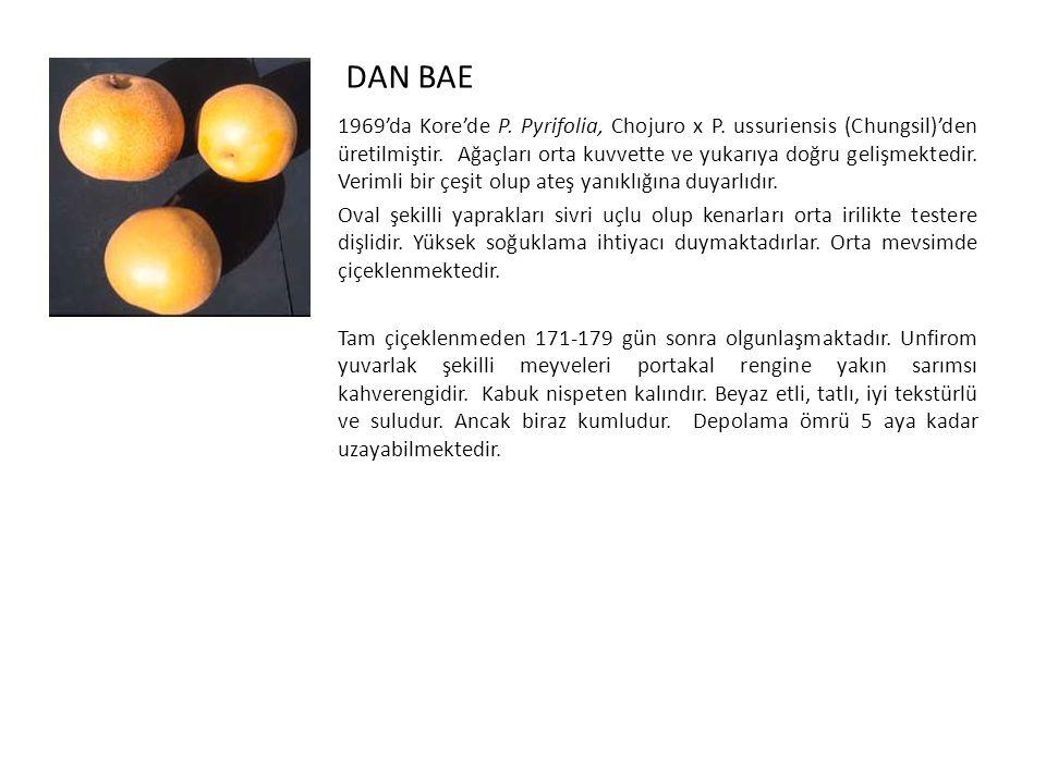 DAN BAE