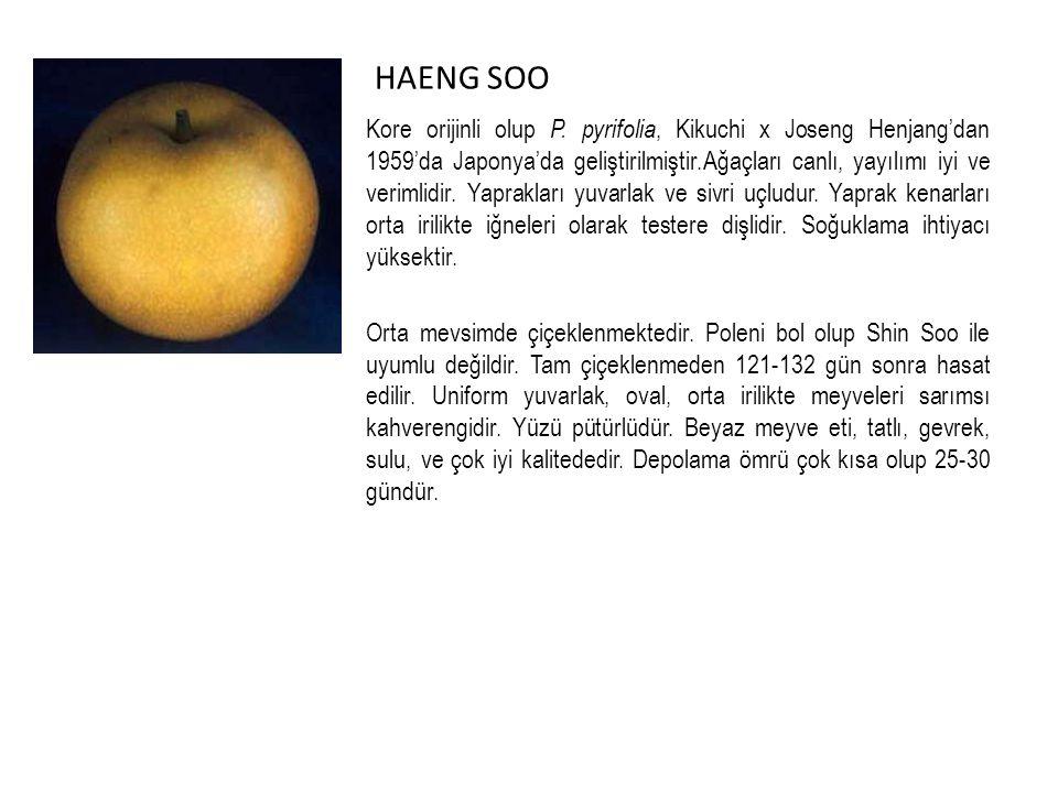 HAENG SOO