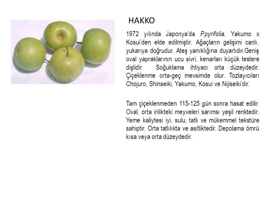 HAKKO