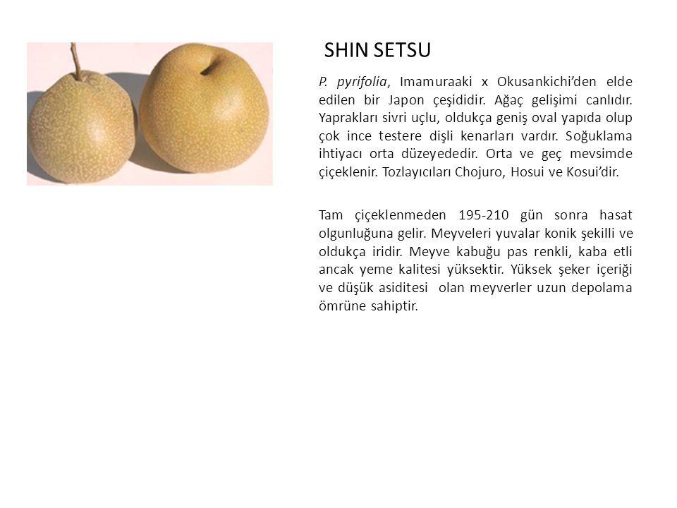 SHIN SETSU