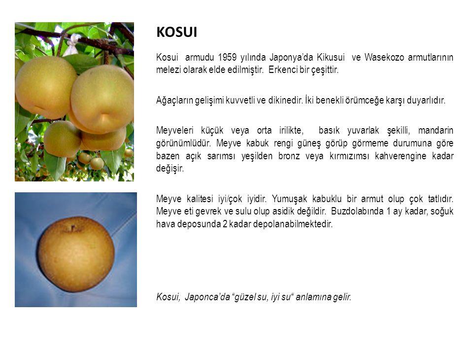 KOSUI Kosui armudu 1959 yılında Japonya'da Kikusui ve Wasekozo armutlarının melezi olarak elde edilmiştir. Erkenci bir çeşittir.