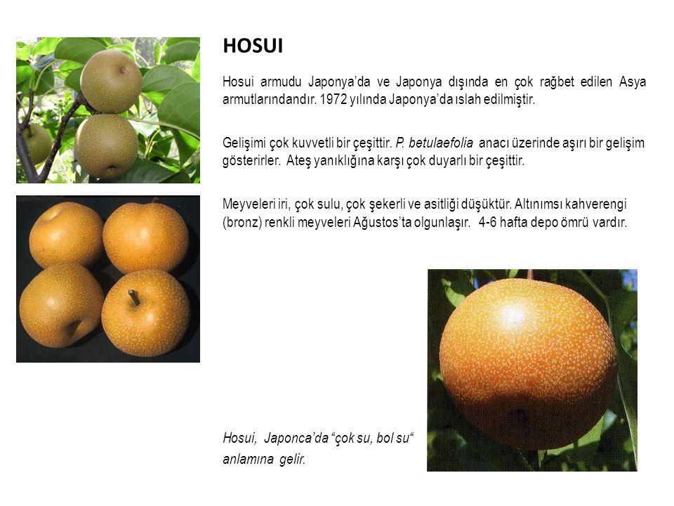 HOSUI Hosui armudu Japonya'da ve Japonya dışında en çok rağbet edilen Asya armutlarındandır. 1972 yılında Japonya'da ıslah edilmiştir.