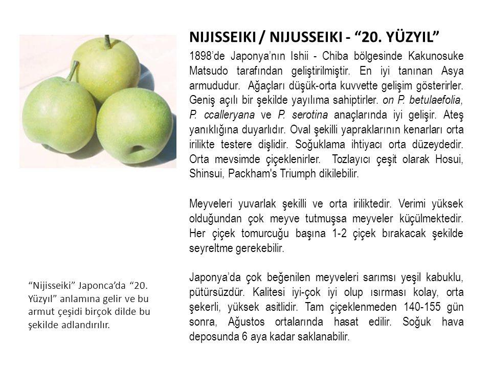 NIJISSEIKI / NIJUSSEIKI - 20. YÜZYIL
