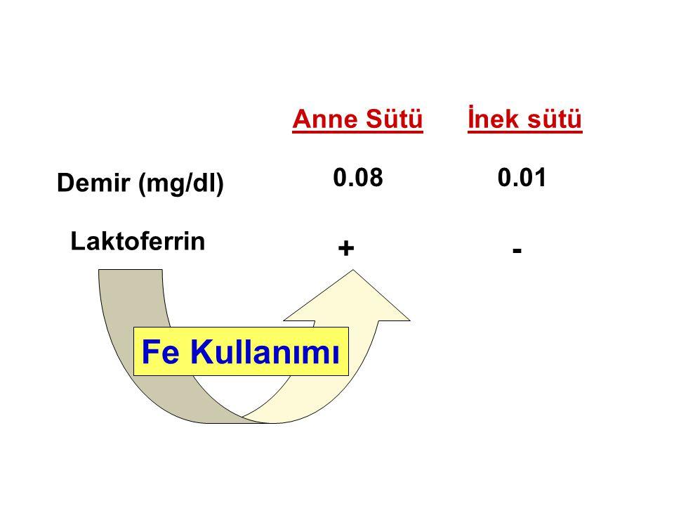 Fe Kullanımı + - Anne Sütü İnek sütü 0.08 0.01 Demir (mg/dl)