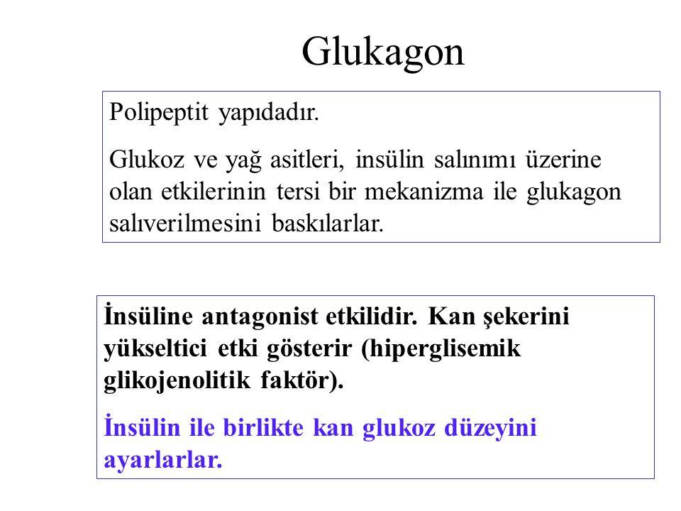Glukagon Polipeptit yapıdadır.