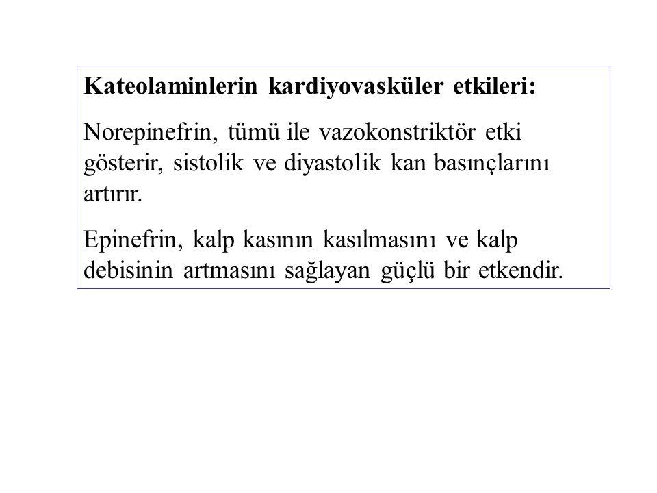 Kateolaminlerin kardiyovasküler etkileri: